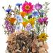 Multum kwiatów jednorocznych miniaturka 2