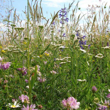 Polskie kwiaty wieloletnie zdjęcie 5