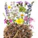 Polskie kwiaty wieloletnie miniaturka 2