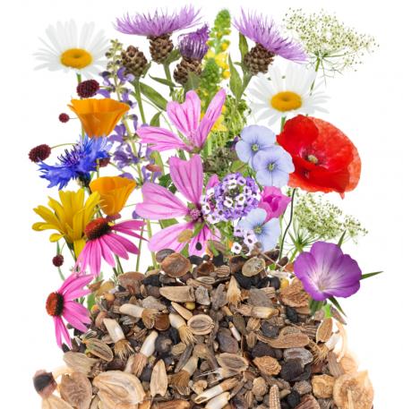 Kwiaty i zioła wieloletnie zdjęcie 2