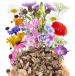 Kwiaty i zioła wieloletnie miniaturka 2