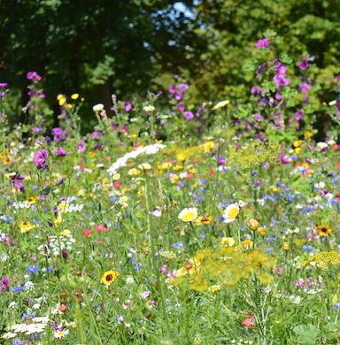 Kwiaty i zioła wieloletnie zdjęcie 5