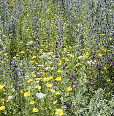 Kwiaty i zioła wieloletnie zdjęcie 6