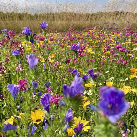 Niskie kwiaty jednoroczne zdjęcie 4