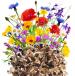 Kwiaty Polne jednoroczne miniaturka 2
