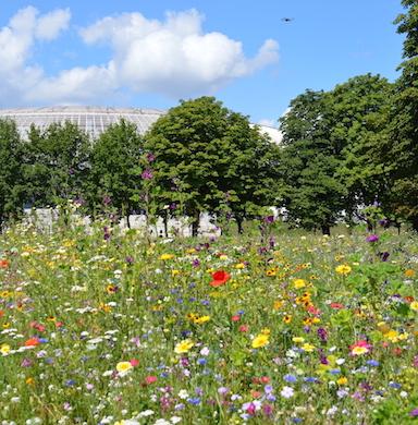 Kwiaty i zioła wieloletnie zdjęcie 3