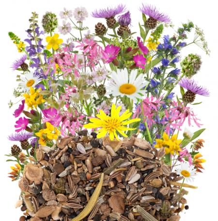 Polskie kwiaty wieloletnie zdjęcie 2